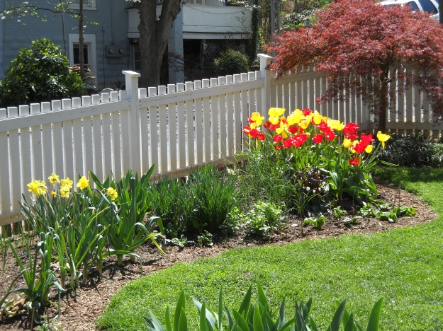 spring, Charlottesville, Virginia