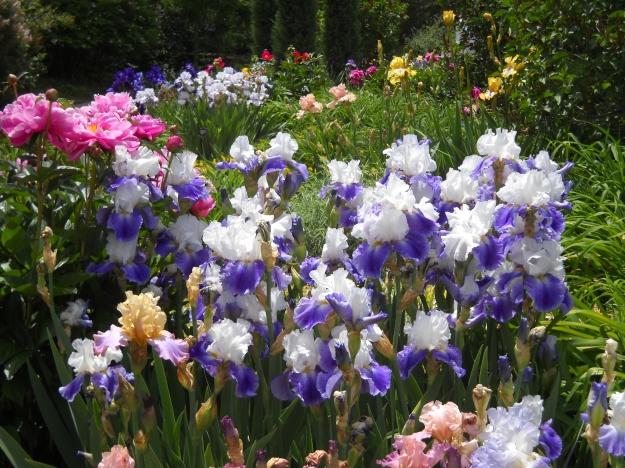 spring flowers, Denver Botanic Gardens