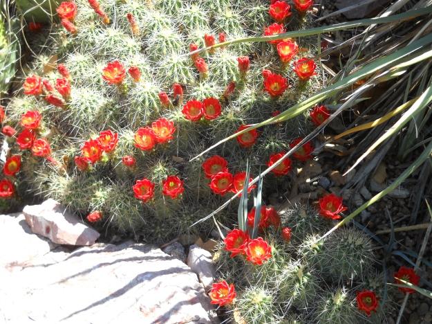 Denver Botanic Gardens, 5.12.12