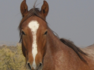 wild horse, Sand Wash Basin