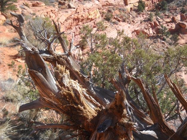 Vermillion Cliffs, Kanab, GSEENM