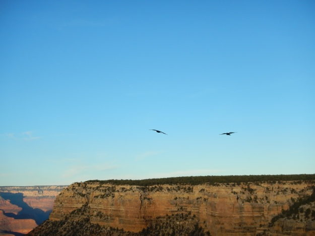 ravens on the South Rim at sunset