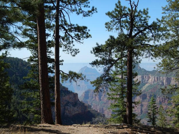 Widforss Trail, North Rim, Grand Canyon