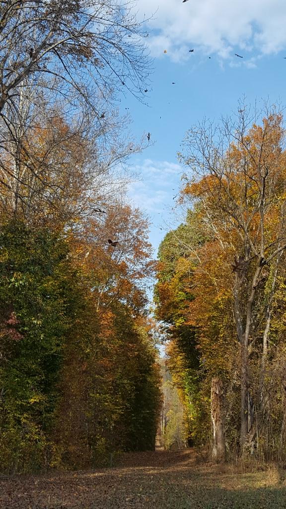 path, Ivy Creek Natural Area