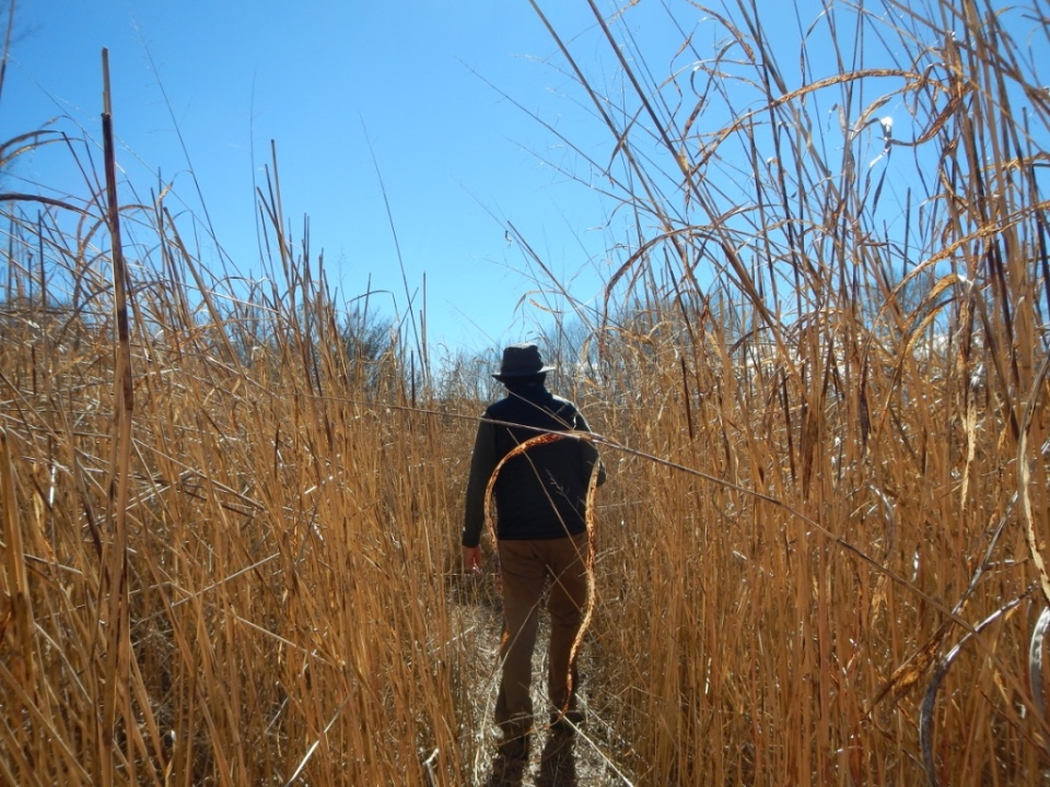 Tom among the sacaton, San Pedro Riparian National Conservation Area