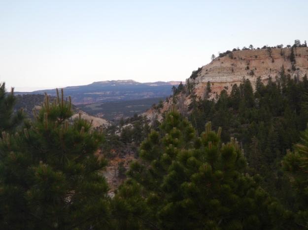 pine green, Singletree Campground, Fishlake National Forest, Utah
