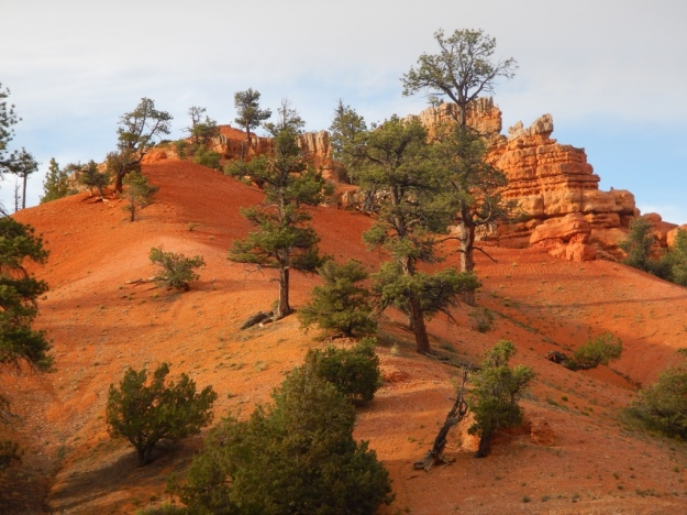 rock red, Red Canyon, Dixie National Forest, Uta