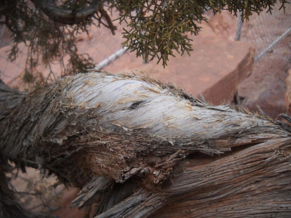 juniper, Needles Overlook