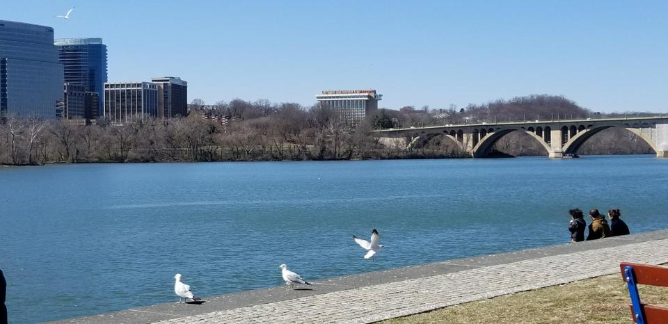 gulls, people, and Potomac River