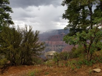 clouds and vegetation, North Rim