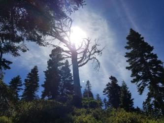 In the Sierras