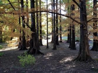 glade, National Arboretum