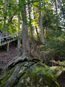 rocks, trees, steps, Mackinac Island